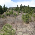 brush area on hunting ranch