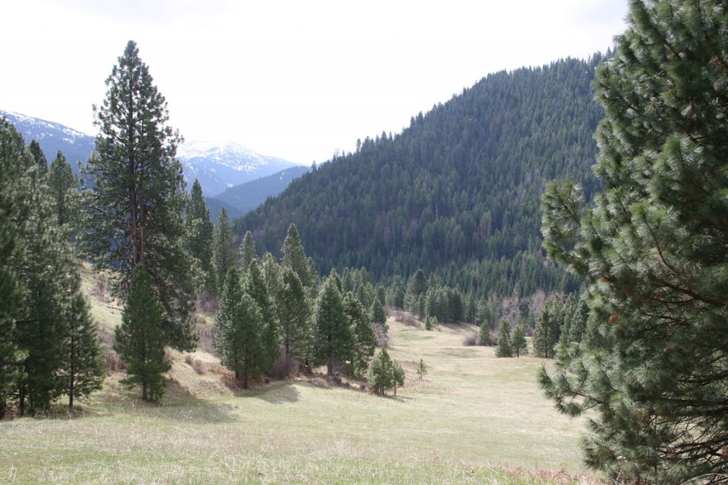 large meadow 1 on hunting ranch