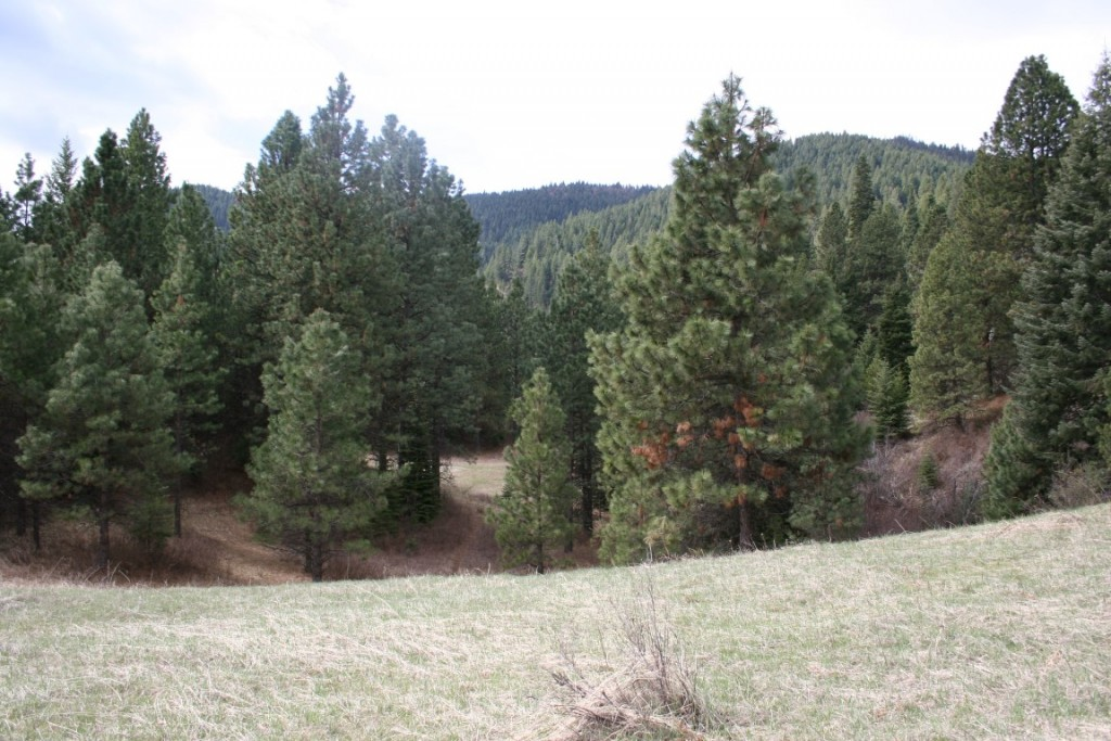 meadows and timber view on hunting ranch